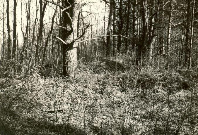 Kääbas - loodest. Foto: E. Väljal, 16.05.1985.