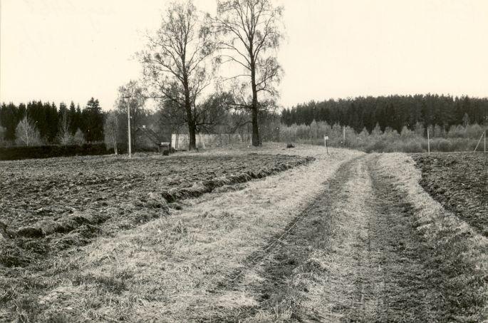 Kivikalme - kirdest. Foto: M. Pakler, 14.05.1987.