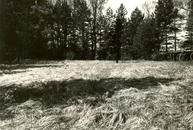 Linnamägi - läänest. Foto: E. Väljal, 17.05.1985.