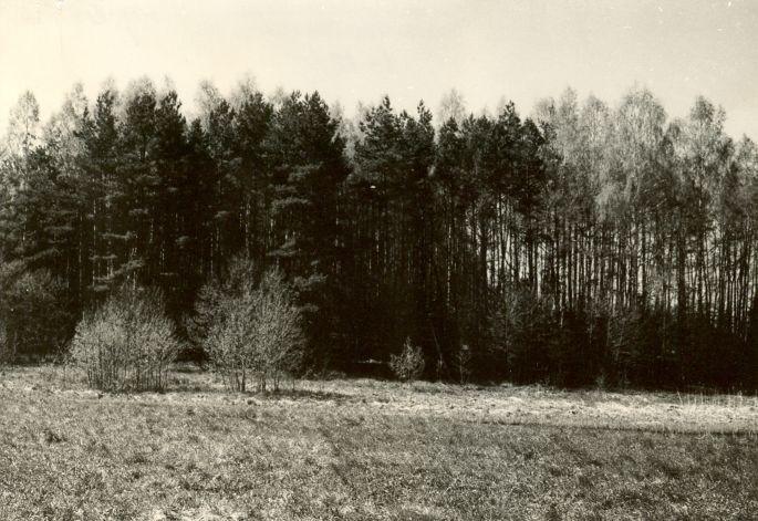 Linnamägi - idast. Foto: E. Väljal, 15.05.1985.