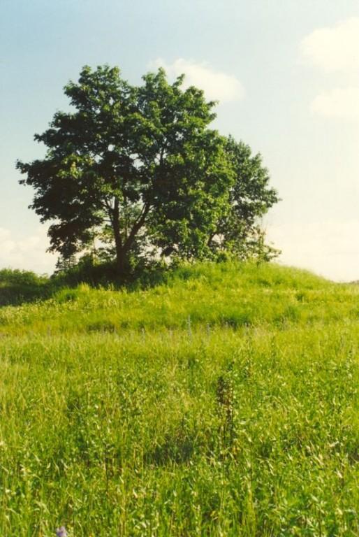 Kalmistu - loodest. Foto: A. Sarv, 30.06.1997.