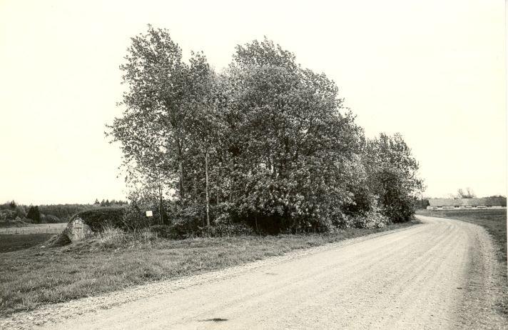 Maa-alune kalmistu - kirdest. Foto: M. Pakler, 12.05.1986.
