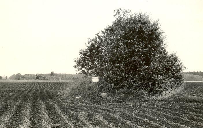Kivikalme - lõunast. Foto: M. Pakler, 12.05.1986.