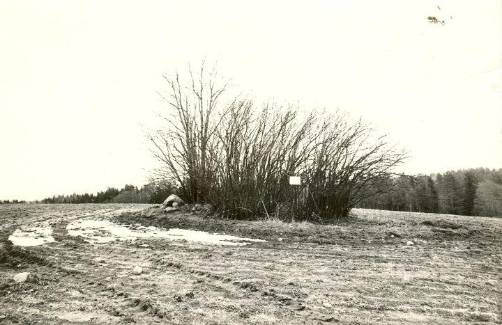 Kivikalme. Foto: M. Pakler, 22.04.1980.