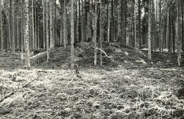 Kääbas - läänest. Foto: M. Pakler, 07.05.1981.