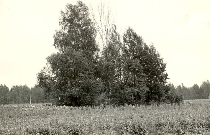 Kivikalme - loodest. Foto: M. Pakler, 14.05.1986.
