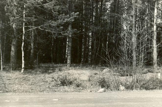 Rauasulatuskoht - kagust. Foto:  A.-M. Rõuk, 24.04.1980.