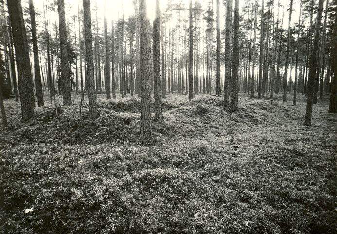 Kääpad. Foto: M. Pakler, 20.10.1987.