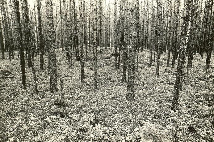 Kääbas - kagust. Foto: M. Pakler, 05.05.1981.