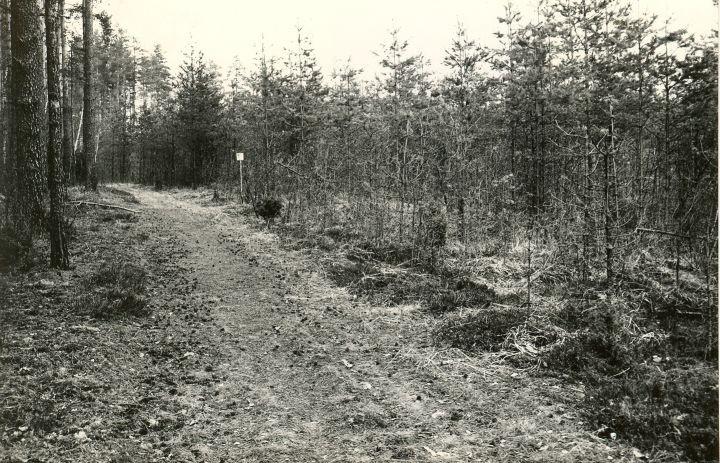 Kääpad - lõunast. Foto: M. Pakler, 06.05.1981.