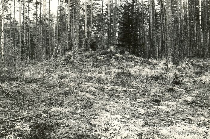 Kääbas - edelast. Foto: M. Pakler, 06.05.1981.