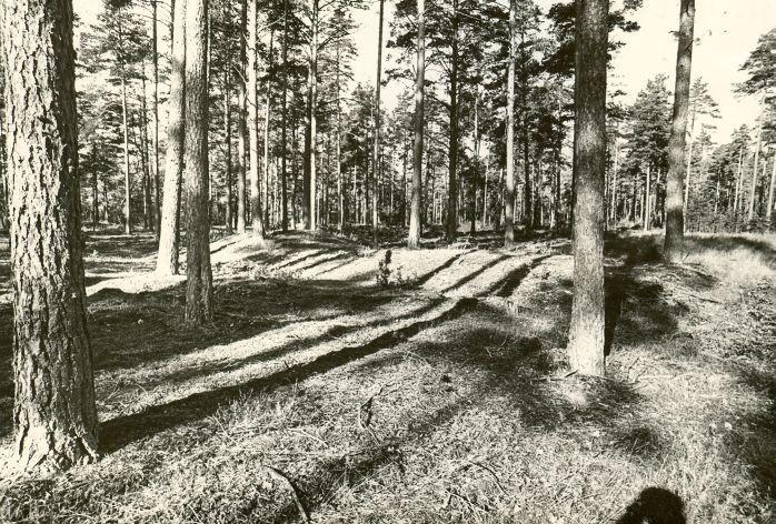 Kääpad. Foto: M. Pakler, 12.091979.