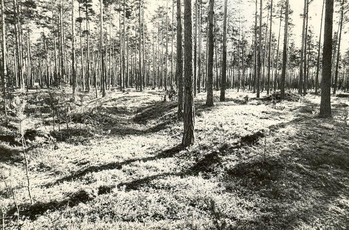Kääpad. Foto: M. Pakler, 12.09.1979.
