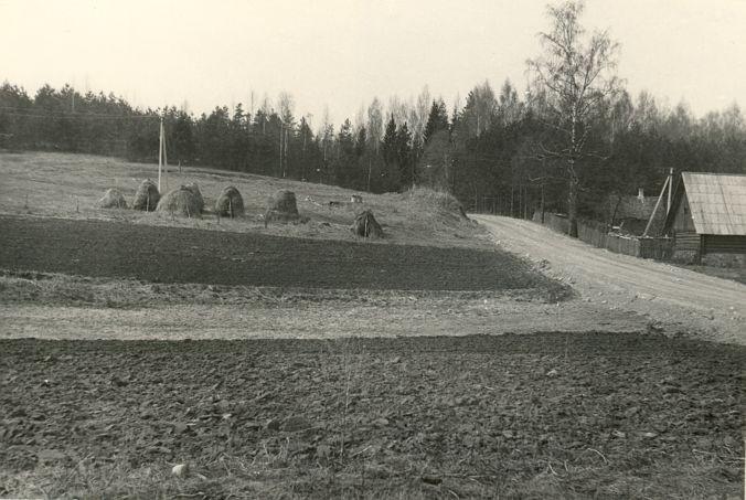Asulakoht - idast. Foto: A.-M. Rõuk, 23.04.1980.