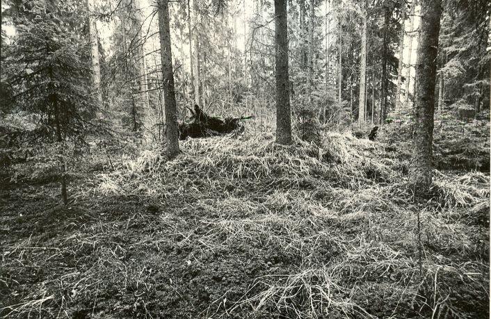 Kääbas - läänest. Foto: M. Pakler, 06.05.1981.