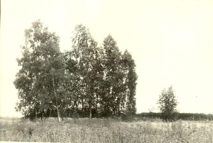 Kivikalme - lõunast. Foto: H. Joonuks, 1975.