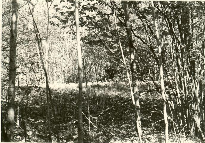"""Kivikalme """"Kabelimägi"""" - lõunast. Foto: H. Joonuks, 1977."""