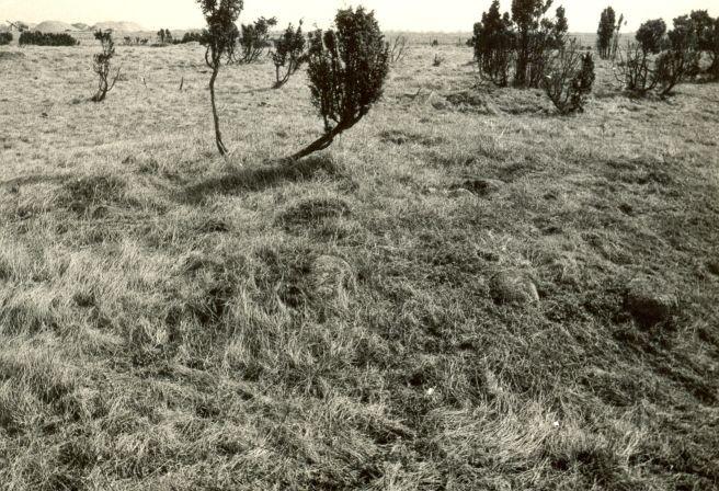 pilt - Kivikalmed - läänest, E. Väljal, 30.mai 198