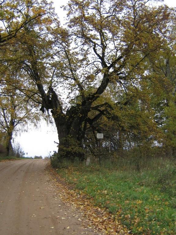 Foto: Mart Siilivask, 15.10.2006.