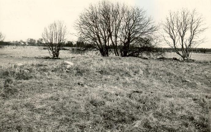 pilt -  Kivikalmed - läänest, E. Väljal