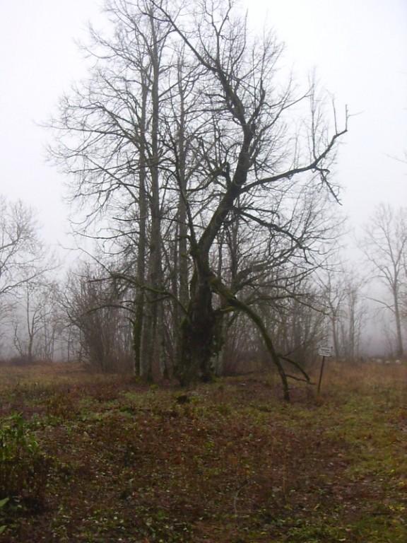 Foto: Tarvi Sits, 29.11.2006.