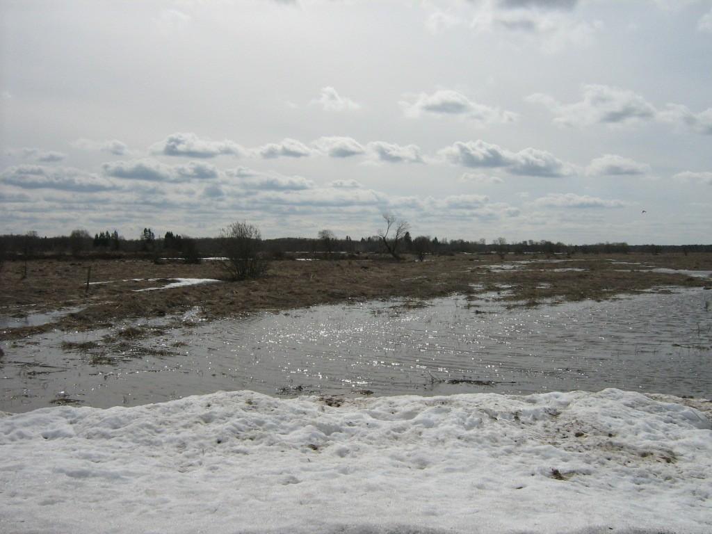 Lohukivi reg nr 10825. Pilt kohast, kus kaardi järgi kivi peaks asuma. Foto: Ingmar Noorlaid, 15.04.2011.