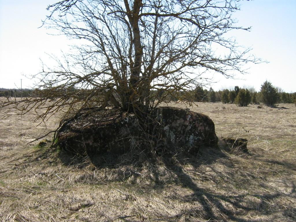 Lohukivi reg nr 10769. Foto: Ingmar Noorlaid, 26.04.2011.