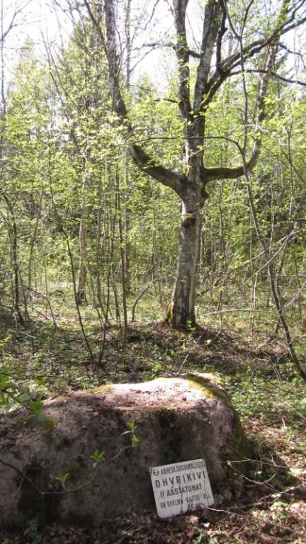 Vaade mälestisele reg nr 11860. Foto: Karin Vimberg, 09.05.2011.