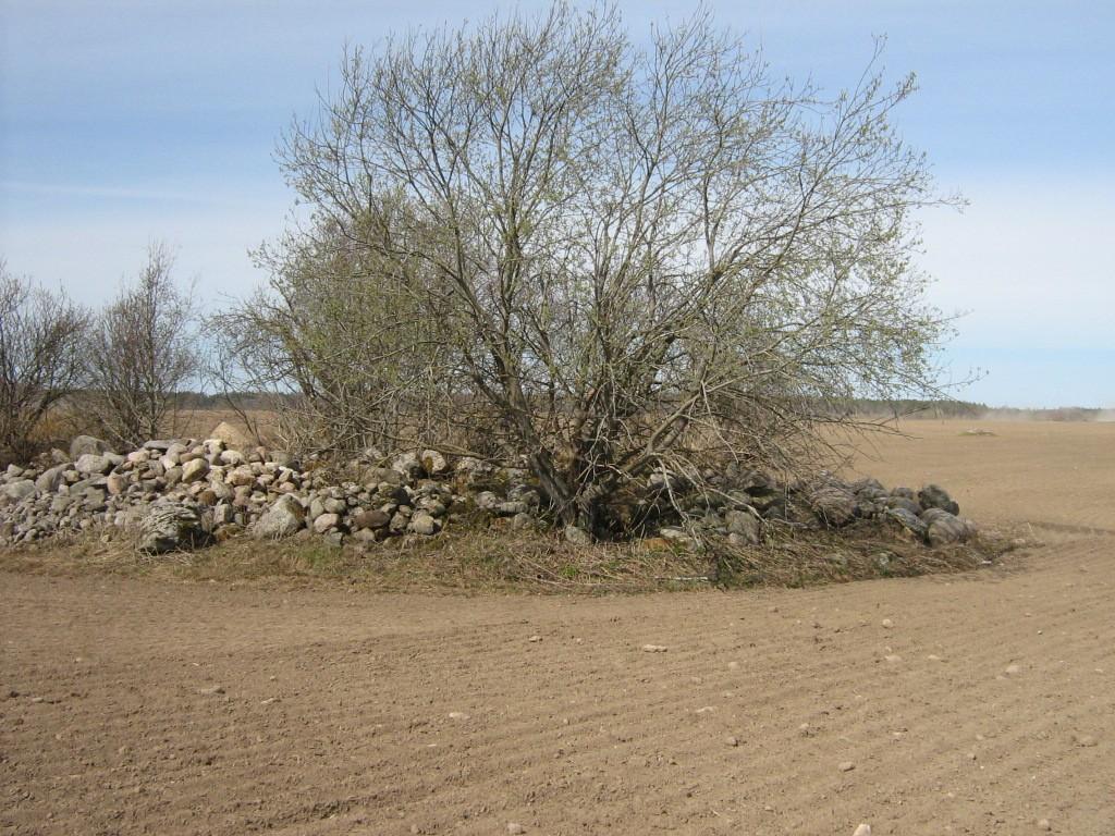 Kivikalme reg nr 10933. Foto: Ingmar Noorlaid, 28.04.2011.