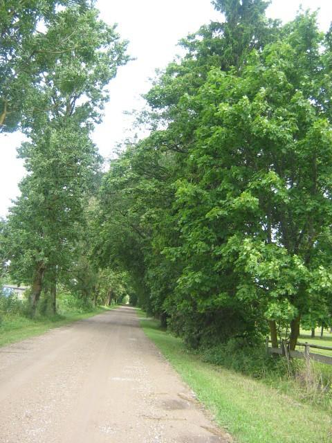Vaade alleele maanteelt 09.08.2010 Nele Rent