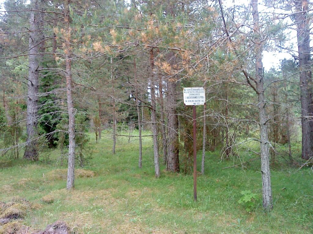 Vaade mälestise tähisele mälestise põhjapiiril. Foto: Karin Vimberg, 17.06.2011.