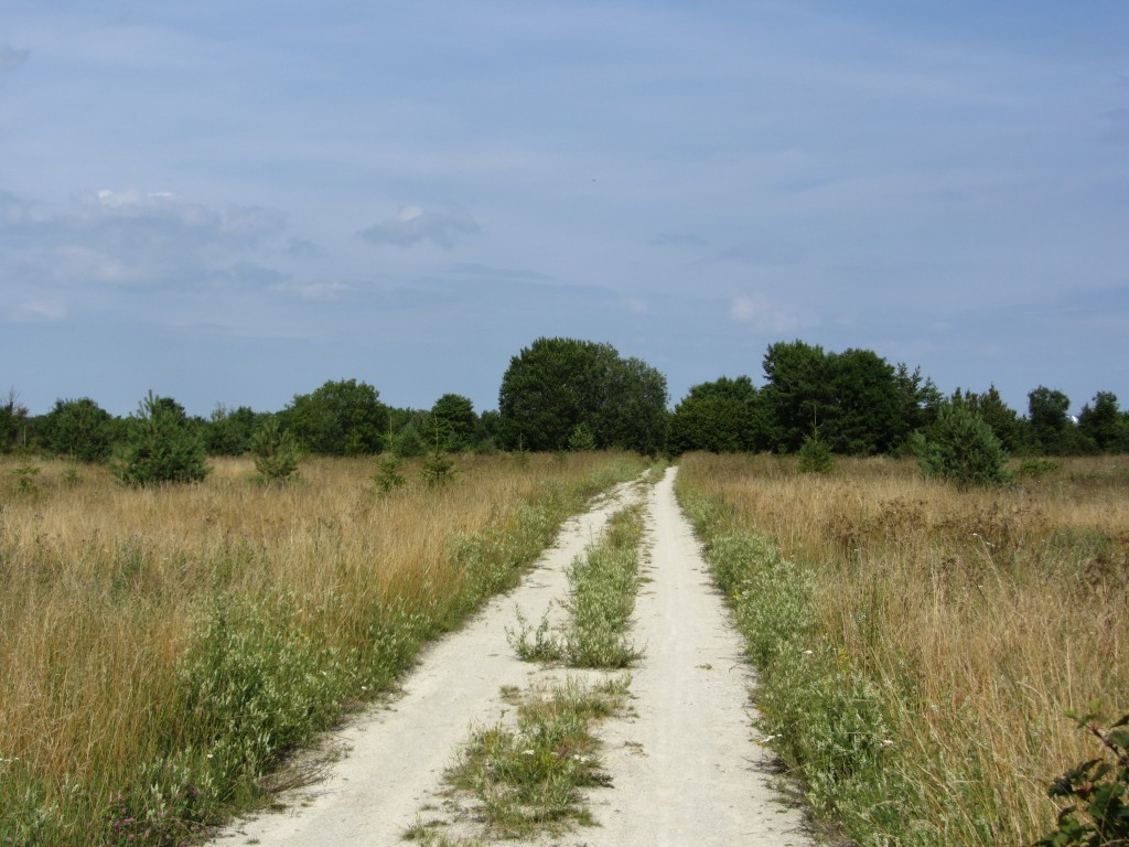 Muistsed põllud. Foto: P. Nork, 20.07.2011.