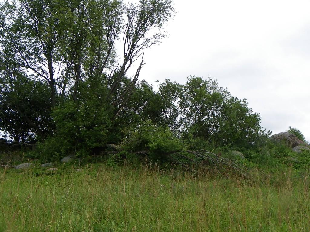 Foto: Triin Äärismaa, 19.07.2011