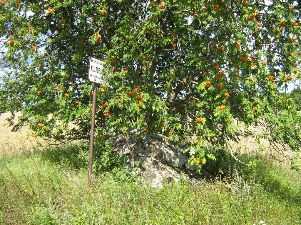 Lohukivi reg nr 10235. Foto: Ingmar Noorlaid, 29.07.2011.