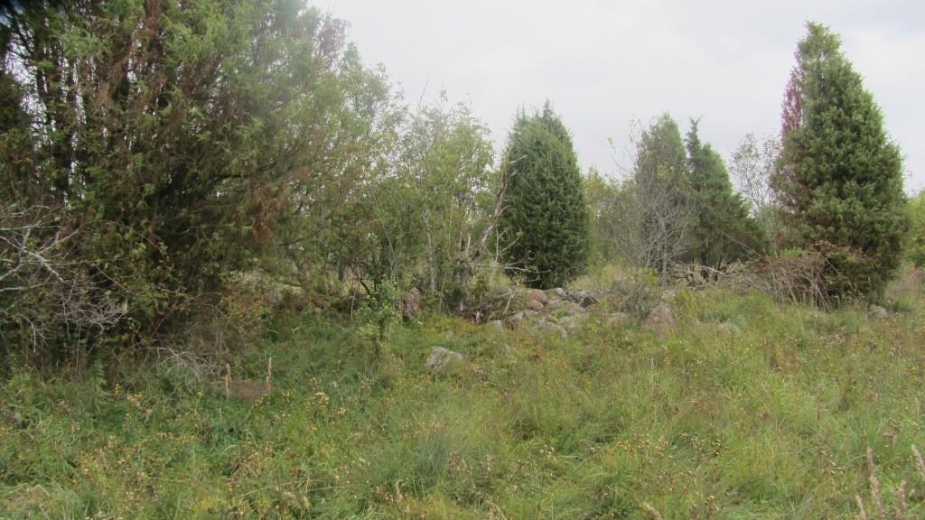 Võhma küla muistsed põllud. Foto: Karin Vimberg, september 2011.