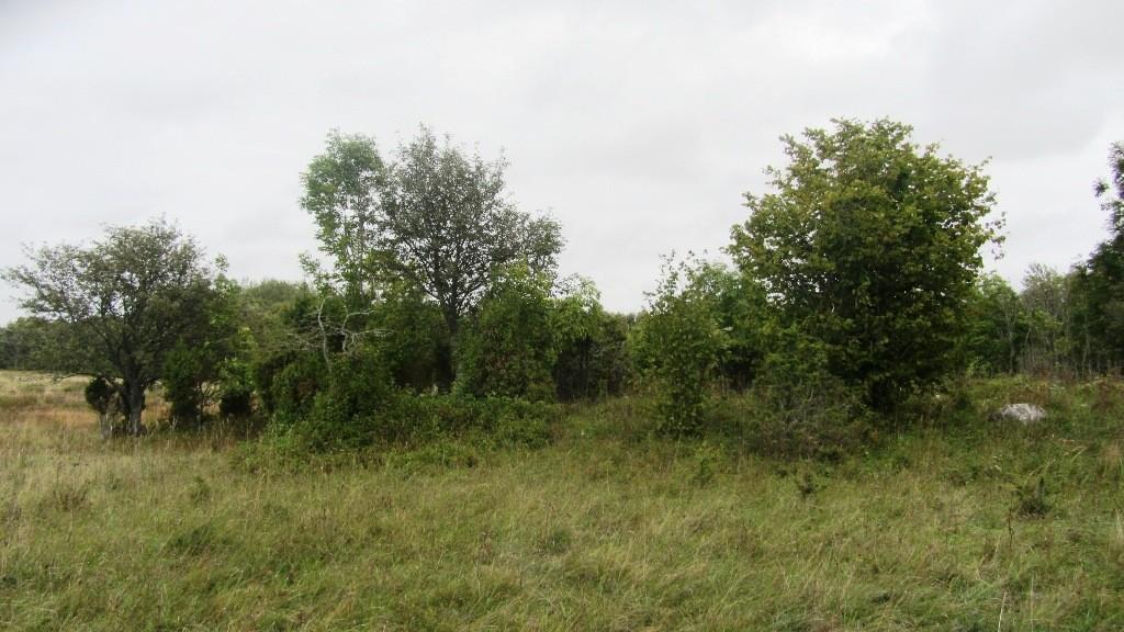 Kivikalme Rahuste külas. Foto: R. Peirumaa, september 2011.
