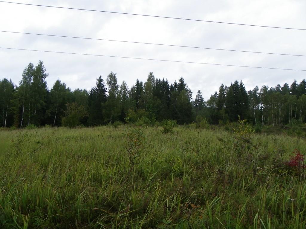 Vaade kalmistule põhjast kalme keskosast. Foto: Triin Äärismaa, 13.09.2011.
