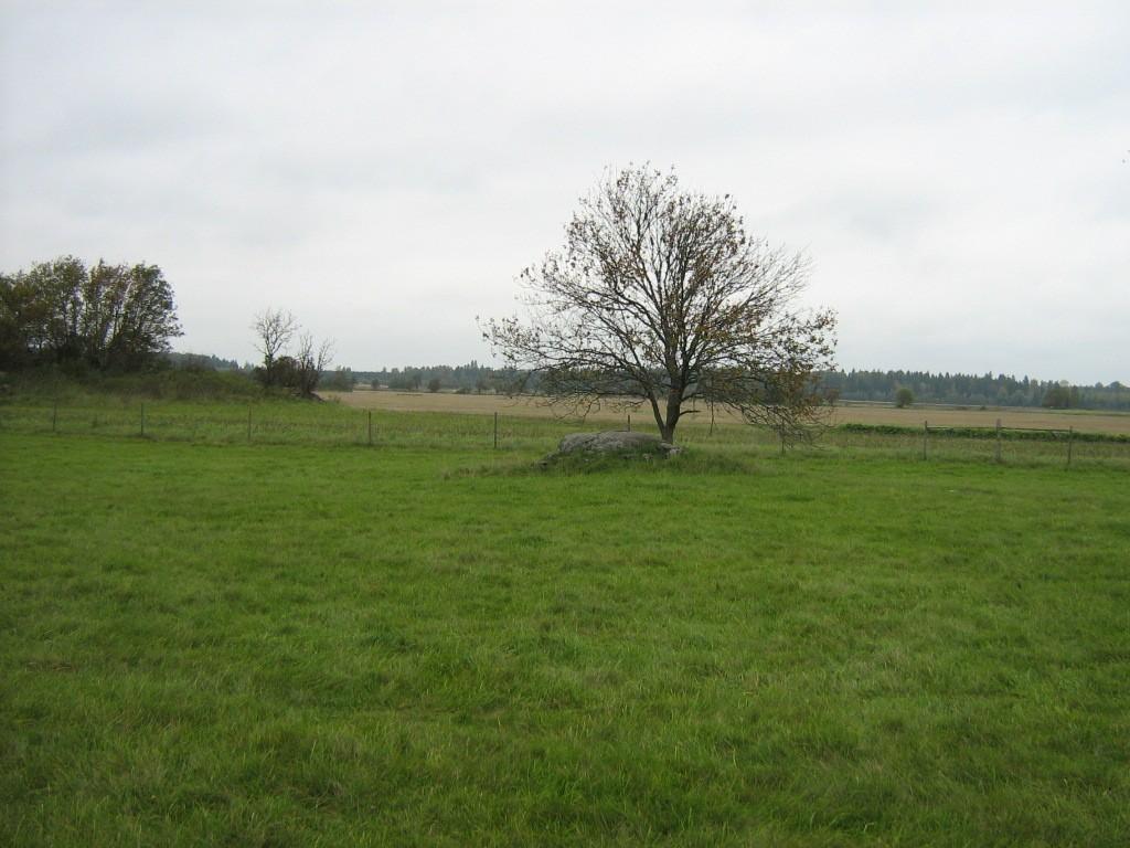 Kalmeväli, kus asub kivikalme reg nr 10536. Foto: Ingmar Noorlaid, 21.09.2011.