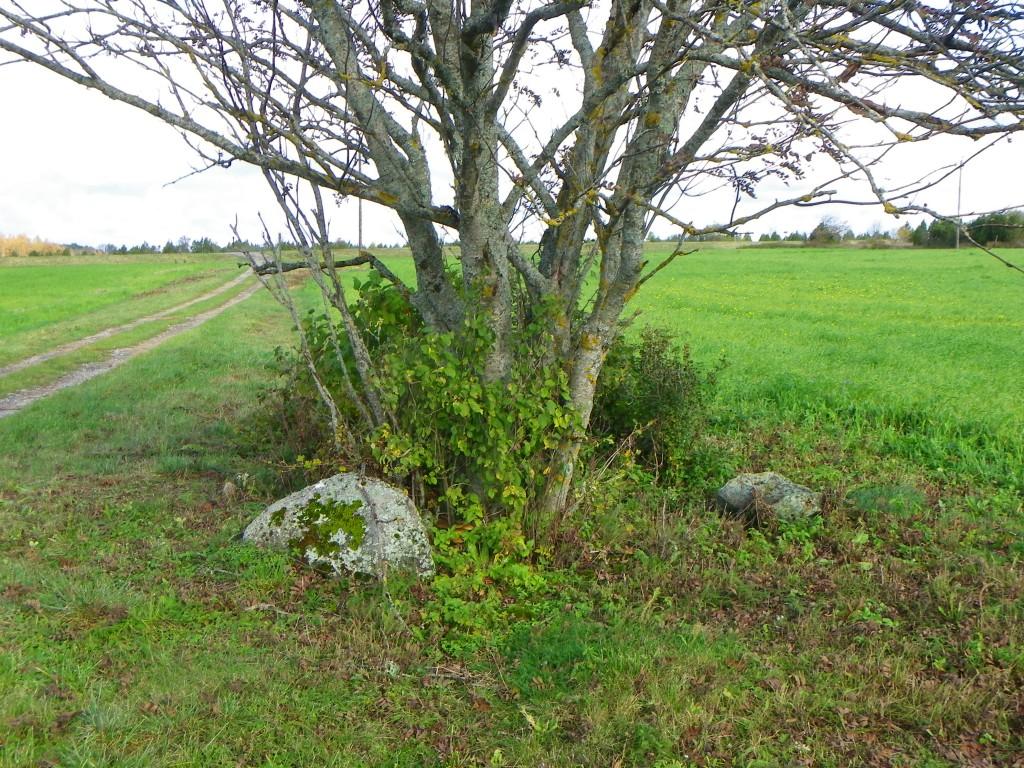 Foto: Triin Äärismaa, 11.10.2011