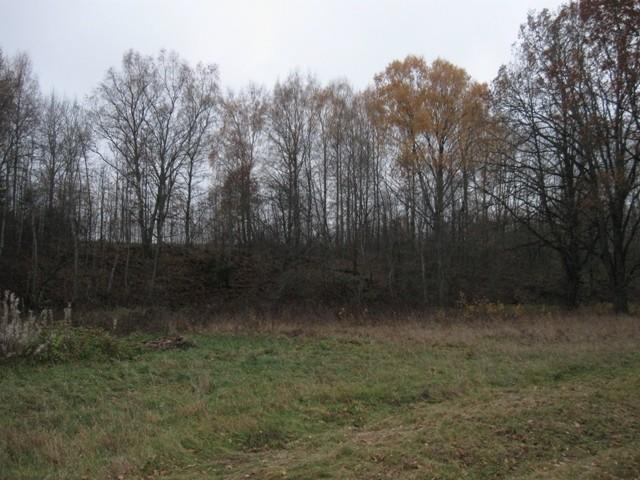 Kalmistu. Foto: Tõnis Taavet, 26.10.2011.