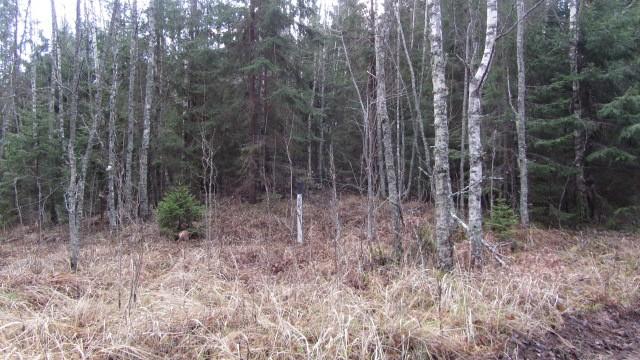 Vaade kalmistu tähisele põhjast. Foto: Karin Vimberg, 15.11.2011.