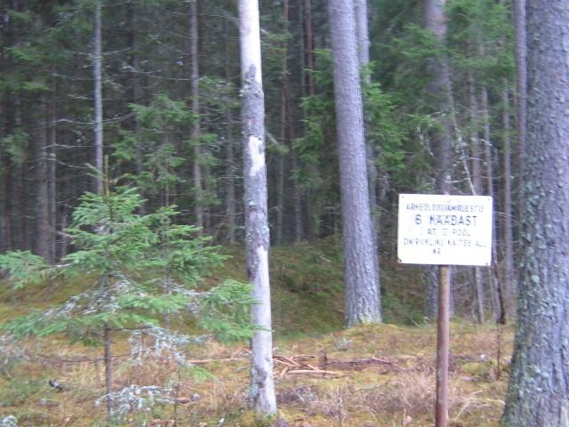 Selle tähise tagant algab esimene kääbast majade juurest metsa saabudes. Foto: Viktor Lõhmus, 22.11.2011.