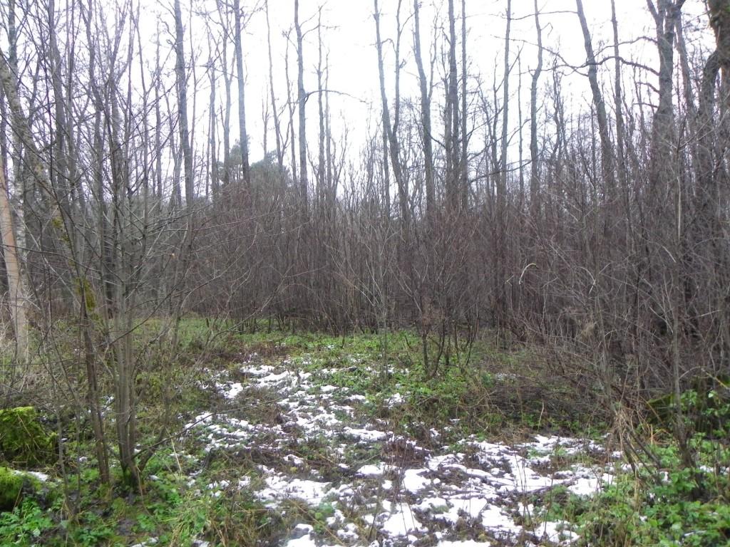 Vaade kalmistule kagust. Foto: Triin Äärismaa, 13.12.2011.