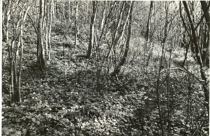 Linnamäe valli edelapoolne ots, lõunast. Foto: O. Multer, mai 1983.