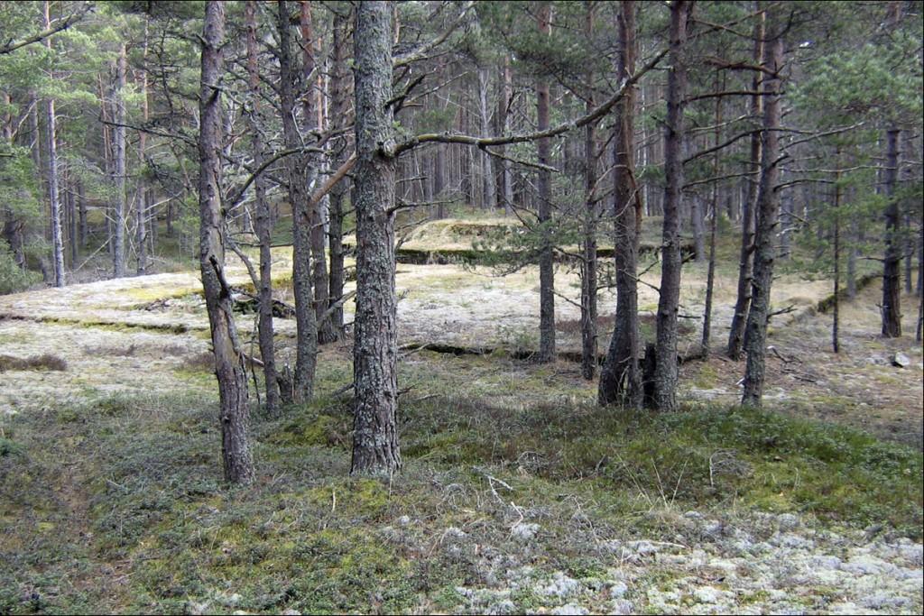 Kahurialus 3  Autor D. Lukas  Kuupäev  18.04.2006