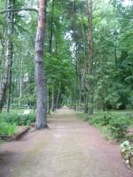 Vaade Tarvastu kalmistu peateele läänest itta Pildistas Anne Kivi 20.06.2011