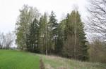 Vaade kalmistule idast. Foto: K. Lange, 08.05.2007.