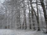 Pärnapuud, kaarjas istutus peahoone ees. Foto: R: Peirumaa 19.03.2012