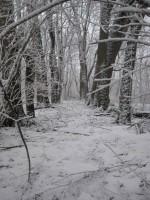 Audla mõisa pargi allee. Foto: R. Peirumaa, 19.03.2012