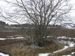 Lohukivi reg nr 10263. Foto: Ingmar Noorlaid, 02.04.2012.